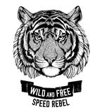 Wild tiger Wild cat Be wild and free T-shirt emblem, template Biker, motorcycle design Hand drawn illustration Stock Photo