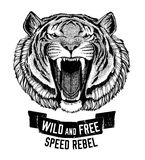 Wild tiger Wild cat Be wild and free T-shirt emblem, template Biker, motorcycle design Hand drawn illustration Stock Image