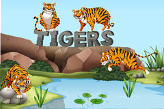 Wild tigers by the pond. Illustration Stock Images