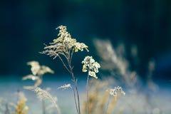 wild torr weed Arkivfoto