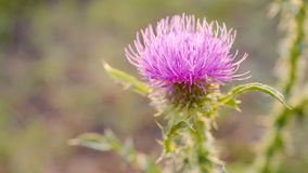 Wild tot bloei komend onkruid in tuin - behang voor een Desktop royalty-vrije stock fotografie