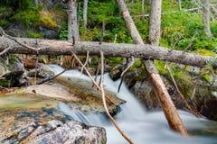 wild trän Arkivfoto