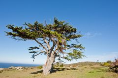 Wild tree at the Cape of Good Hope peninsula. In South Africa royalty free stock photography