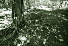 Wild tree in jungle Royalty Free Stock Photo