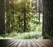 Wild trees in forest Royalty Free Stock Photo