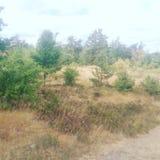 Wild trees národní park Royalty Free Stock Photography