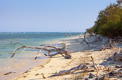 Wild tropical beach littered with driftwood Royalty Free Stock Image