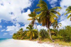 Wild tropical beach. With palm trees near Punta Cana Royalty Free Stock Photo