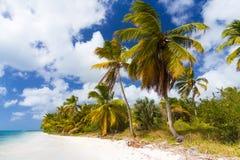 Wild tropical beach Royalty Free Stock Photo