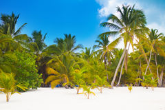 Wild tropical beach Royalty Free Stock Photography