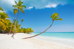 Wild tropical beach Royalty Free Stock Photo