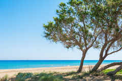 Wild tropical beach with white sand, turquoise water and trees Royalty Free Stock Image