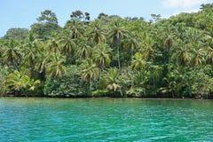 Wild tropical coast Panama Central America. Wild tropical coast with lush vegetation viewed from the sea, Loma Partida island, Bocas del Toro, Panama, Caribbean royalty free stock photo