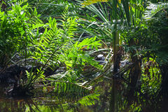 Wild tropical forest landscape with green plants Stock Photos