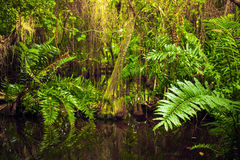 Wild tropical forest landscape with green plants Stock Images