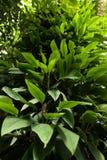 Wild tropisch bos na regen royalty-vrije stock foto
