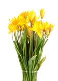 Wild tulips Stock Image