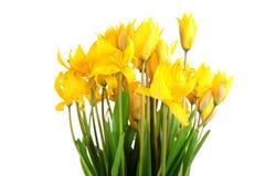 Wild tulips Stock Images