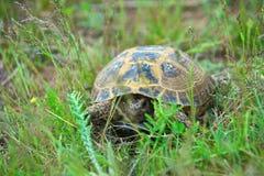 Wild turtle Stock Photos