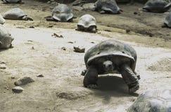 Wild turtles Royalty Free Stock Photos