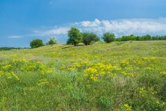 Wild Ukrainian steppe Stock Photos