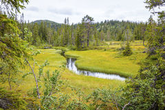 Wild and untouched forest in the high moutains of Norway Royalty Free Stock Images