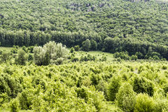 Wild, untouched forests Royalty Free Stock Image
