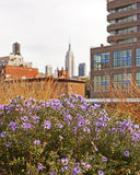 Wild Urban Flowers Stock Photography