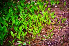 wild växt royaltyfria foton