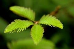 wild växt Fotografering för Bildbyråer