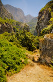 Wild valley lush vegetation. Megalo Seitani, Samos Royalty Free Stock Photography