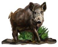 Wild varken Stock Afbeelding