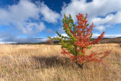 Wild vastness with unusual tree. Wild vastness around mountain Rtanj in Serbia with unusual tree in the foreground Stock Photos