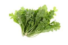 Wild vegetable Stock Photos