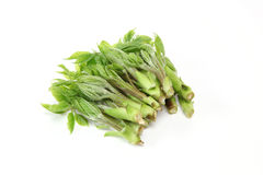 Wild vegetable called Koshiabura in Japan Stock Photography