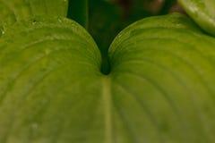 wild vegetation Fotografering för Bildbyråer