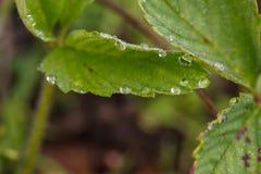 wild vegetation Arkivfoto