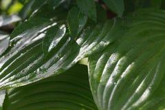 wild vegetation Royaltyfria Foton