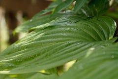 wild vegetation Royaltyfri Bild