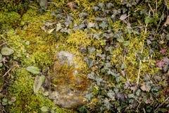 wild vegetation background Royalty Free Stock Photography
