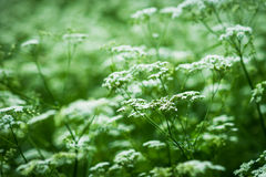 Wild vegetation Stock Images