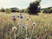 Wild vegetation. Wild flowers and plants on a field in the country side Royalty Free Stock Photos