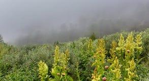 Wild vegetation in the fog in Altai Krai mountains. Wild vegetation in the fog in the Altai Krai mountains Royalty Free Stock Photos