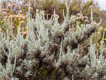 Wild Vegetation at Laguna Coast Wilderness Park Royalty Free Stock Photo