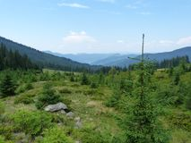 Wild vegetation of the mountain forests. Royalty Free Stock Photos