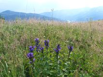 Wild vegetation. Royalty Free Stock Photos