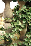 Wild vines climbing up the pillars Stock Images