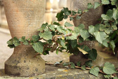 Wild vines climbing up the pillars Stock Photo