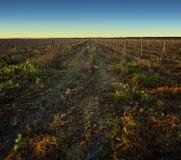 Wild. Vineyard field after the catching, Ribatejo, Santarem, Portugal Stock Photos