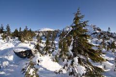 wild vinter liggandenaturrussia för snöig taiga Royaltyfri Fotografi